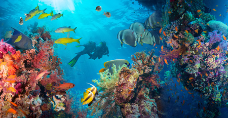 Colorful underwater offshore rocky reef with coral and sponges and small tropical fish swimming by in a blue ocean Фото со стока