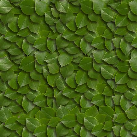 緑の葉の背景。クローズ アップ