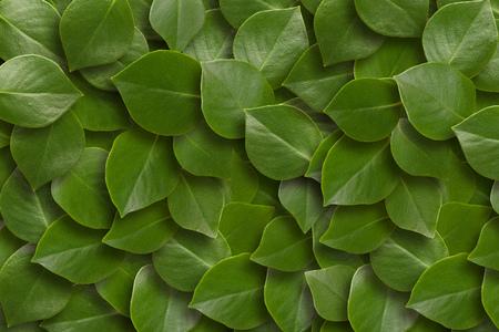 Fond de feuilles vertes. Fermer