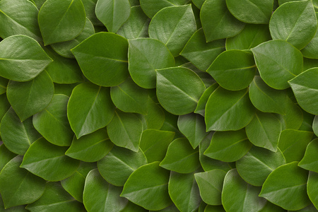 Green leaves background. Close up