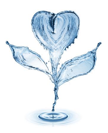 Fleur faite de projections d'eau isolé sur fond blanc. concept de l'amour Banque d'images