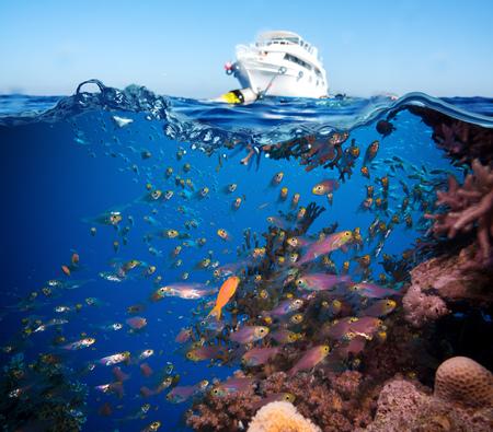 Colorful récif rocheux au large sous-marine de corail et les éponges et petite piscine de poissons tropicaux par dans un océan bleu