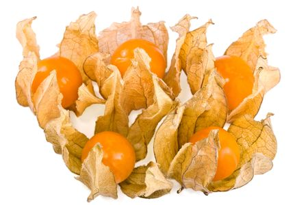 alkekengi: Physalis alkekengi winter cherry