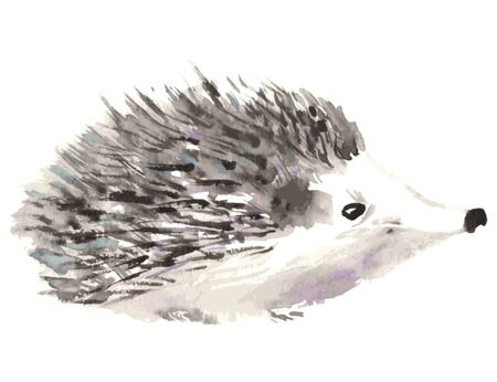 Hedgehog isolated on white background. Watercolor vector illustration