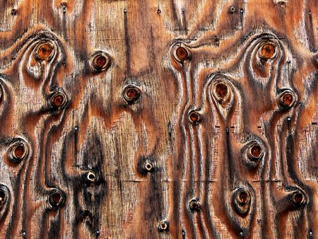 knotty: Knotty Plywood