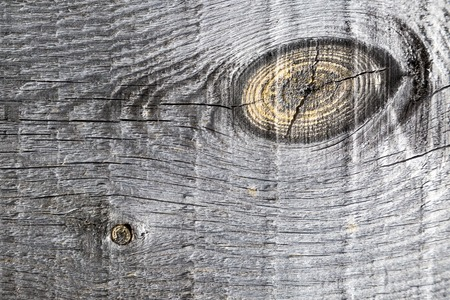 wainscot: Old pine boards with knots macro Texture