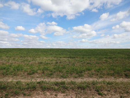 blue cloudy sky: Horizon between the field with plants and blue cloudy sky Stock Photo