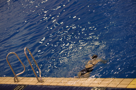 natación sincronizada: Los equipos femeninos del Campeonato de natación sincronizada en la piscina cubierta