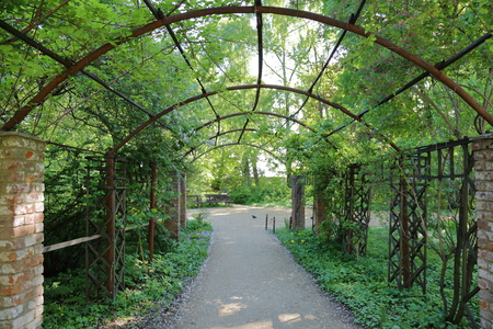 shady: Shady vault in the form of an arch of the wild green grapes