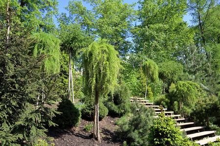 lush foliage: Strange green tree with a thin trunk and lush foliage Stock Photo