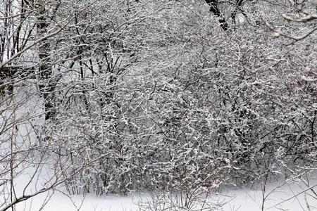 precipitacion: Bosque de invierno bajo una gruesa capa de nieve densa