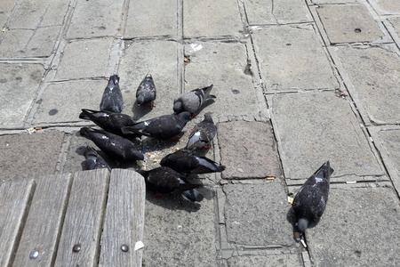 beak doves: Gray pigeons eating food on the stone city pavement Stock Photo