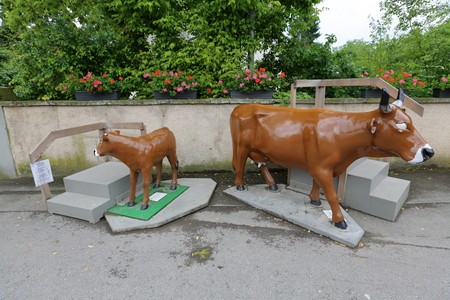 horn like: Plastic life-size cow for photographing with children
