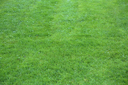 grassplot: Trimmed lawn with a bright green lush grass Stock Photo