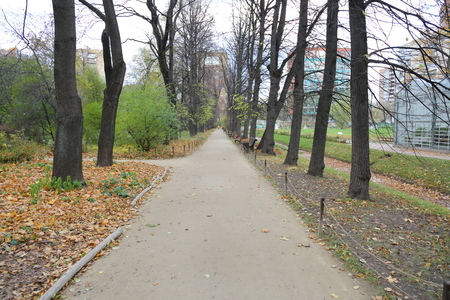 The cozy park in the center of the city in late autumn when leaf fall