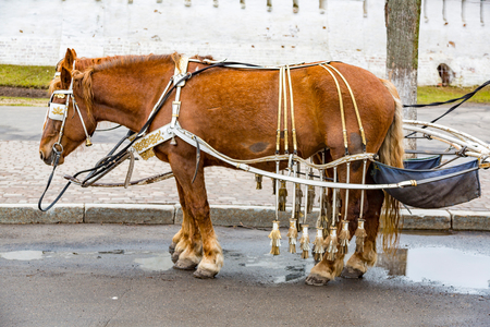An adult horse in a harness for tourists on a city street