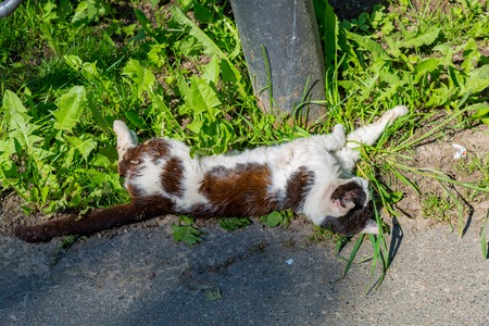White and brown cat sleeping in the grass near the pillar