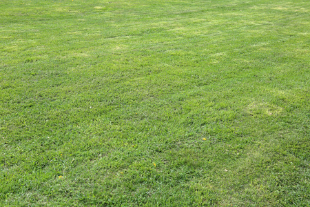 Trimmed lawn with a bright green lush grass Reklamní fotografie