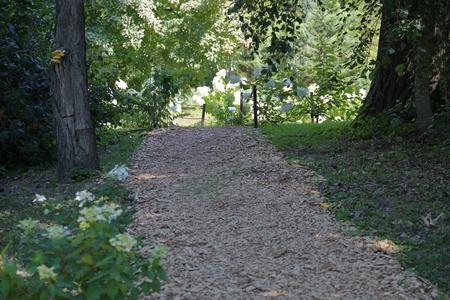 Path for walking pedestrians in a summer green city park 免版税图像