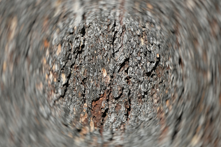 The textured surface of the bark of the old perennial deciduous tree