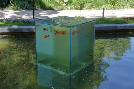 Grande acquario in vetro trasparente con pesci sulla superficie del laghetto