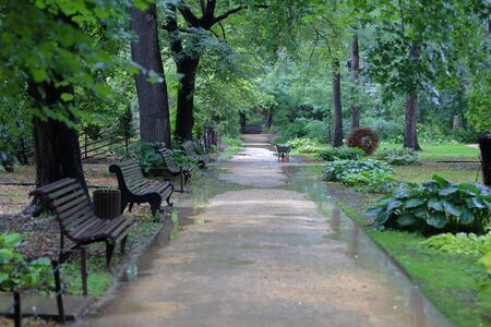 Path for walking pedestrians in a summer green city park after the rain 写真素材