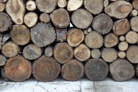 A dry wood log for firing and heating lies in the backyard