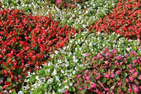 Bright flower bed of plants in summer city park