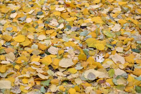 Bright fallen leaves of golden color on the autumn ground