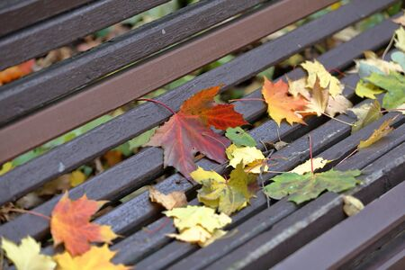 Multi-colored fallen maple leaves on a wooden bench in the autumn park 免版税图像