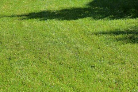 Trimmed lawn with a bright green lush grass Imagens