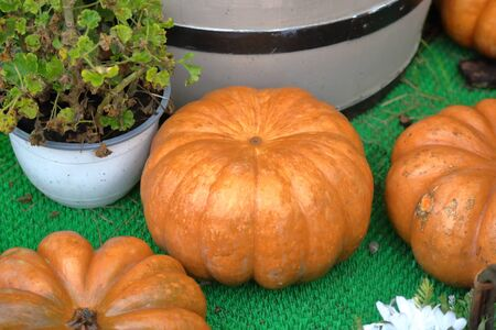 Autumn pumpkin as a symbol of Halloween in the backyard of the farm