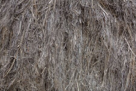 Textured dried stalks of cannabis sativa for the production of woven goods