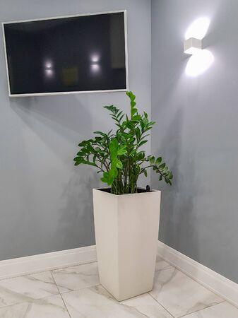 TV panel and plant in a white pot on a background of a gray wall with a lamp