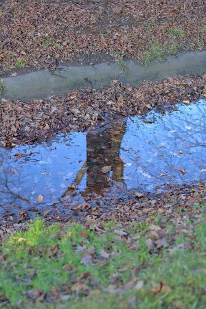 Water surface of a dried up small stream with reflection of a tree