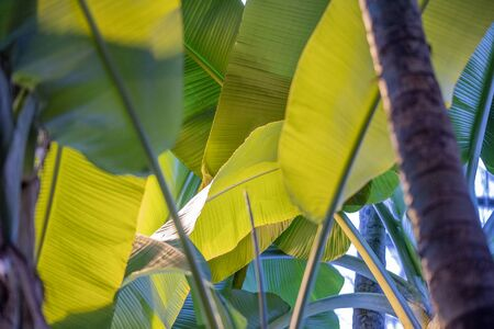 Close to a thick juicy leaf of an exotic plant in a greenhouse