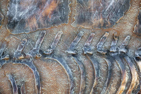 Original textured surface of a natural coarse stone