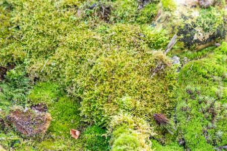 Bright textured surface of multi-colored natural moss Imagens