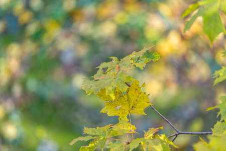Colorful tree branches with bright foliage in golden autumn season Reklamní fotografie