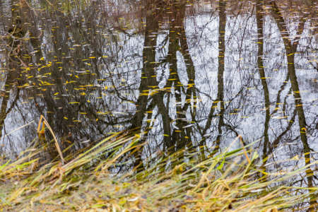 The tree is reflected in the water surface of the pond in the park Stockfoto