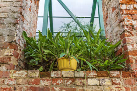 Bright green plant in an old brick niche as an element of garden decor