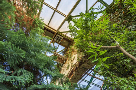 Steel beams and frosted glass as the base of the roof of the botanical greenhouse Standard-Bild