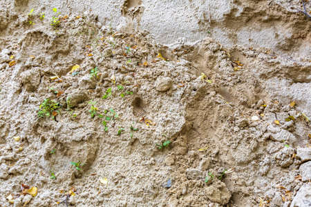 Uneven textured surface of a mix of yellow sand, autumn leaves and plants