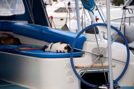 Sleeping cat on yacht Stock Photo