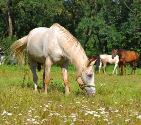 horse pipes: White horse pastures in field with others in background