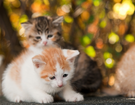 Two little kitten sitting on the roof