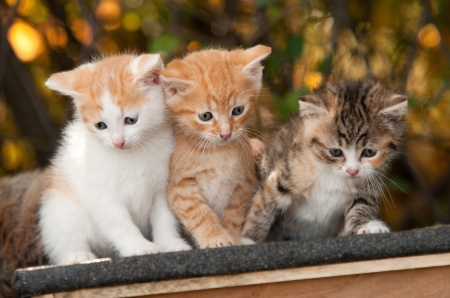 Three little kitten sitting together Imagens - 16004780