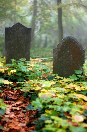 Old Gravestone with leaf on autumn photo