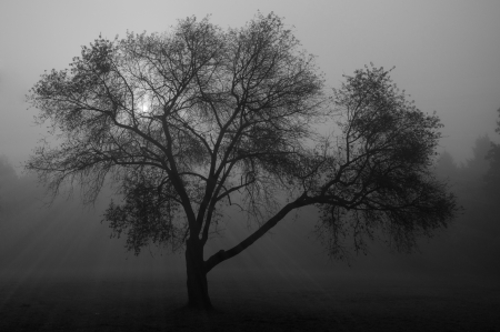 Tree standing alone in mist with sunrays