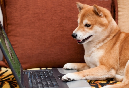 Dog watching other dog on laptop Stock Photo